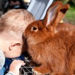 Red rabbit sniffing child — Stock Photo