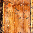 Honeycombs with bees — Stok fotoğraf