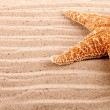 Stock Photo: Background of great sestar lying in sand