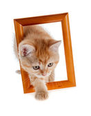 Red kitten out of a wooden frame — Stockfoto