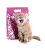 Red kitten yawns of the gift bags — Stockfoto