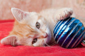 Red kitten lays on a red with a Christmas toy — Foto Stock