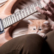 Kitten lays on man's lap who playing a guitar — Стоковое фото