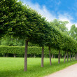 Alley of green trees trimmed square shape in the Park — Stock Photo
