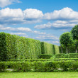 Stock Photo: Alley in Park with exactly topiary trees