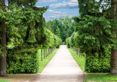 Alley in the Park with exactly topiary trees — Stock Photo