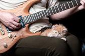 Červené kotě na člověka nohou — Stock fotografie