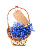 Flowers cornflower — Stock Photo