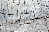Old wooden texture of wood in the context of monochrome — Stock Photo