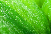 Water drops on green leaf — Photo
