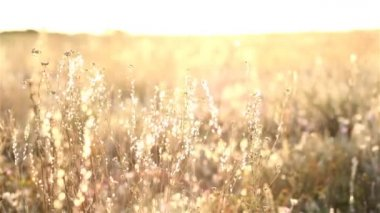 Sunrise In The Steppe — Stok video