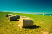 Hay bales in New Zealand — Stock Photo