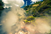 Steaming nature in New Zealand — Stock Photo