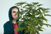 Happy man with cannabis plant — Stock Photo