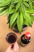 Cannabis and alcohol — Stock Photo