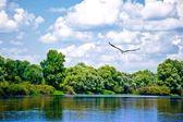 Stork flying — Stock Photo
