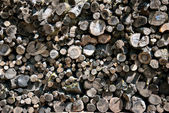 Background of dry chopped firewood  — Stock Photo