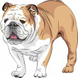 Vector sketch dog English Bulldog breed - Stock Vector