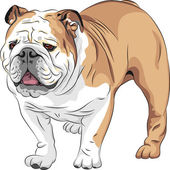 Vector sketch dog English Bulldog breed — Stock Vector