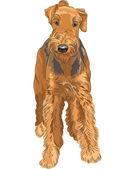 Vector sketch dog Airedale Terrier breed — Stock Vector