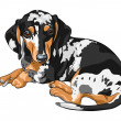 Vector sketch dog Dachshund breed lying — Stock Vector