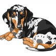Stock Vector: Vector sketch dog Dachshund breed lying