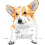 Vector sketch dog Pembroke Welsh corgi smiling — Stock Vector #12557947