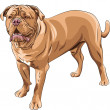 Vector  dog breed French Mastiff — Stock Vector
