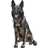Vector color sketch black dog German shepherd breed — Stock Vector