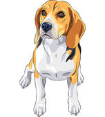 Vector sketch dog Beagle breed sitting — Stock Vector