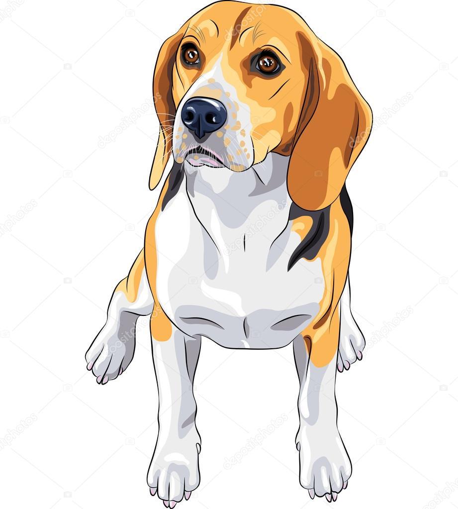 for Disegno cane facile