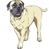 Vector sketch portrait of the domestic dog breed Bullmastiff sta — Stock Vector
