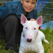 Boy and white Bull Terrier Dog breed — Stock Photo