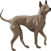 Vector color sketch Thai Ridgeback Dog breed runs — Stock Vector