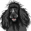 Vector color sketch of the black smiling dog Poodle breed — Stock Vector