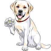 Vector dog Labrador Retriever cheerful smiles and gives a paw — Stock Vector
