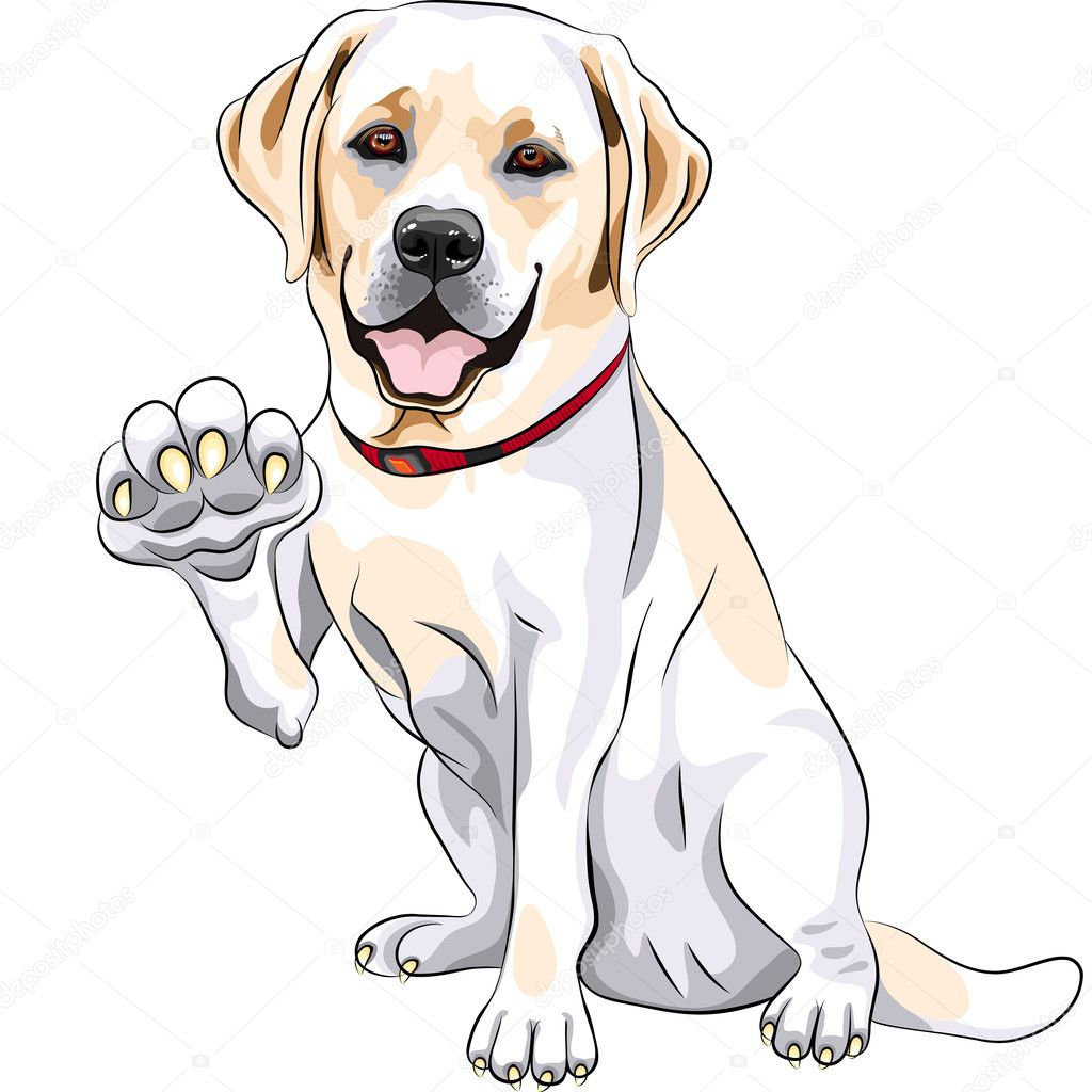 Outstanding dog illustration vector pics