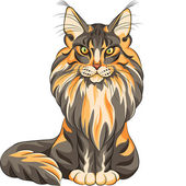 Vector color sketch fluffy Maine Coon cat — Stock Vector