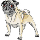 Vector sketch angry dog pug breed — Stock Vector