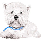 Vector serious dog West Highland White Terrier breed sitting — Stock Vector