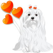 Valentine card with dog Maltese and hearts — Stock Vector