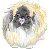Vector pedigreed dog Sable Pekingese breed — Stock Vector