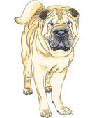 Vector sketch yellow gun dog breed Chinese Shar Pei — Stock Vector