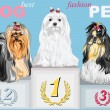 Stock Vector: Vector fashion dog champion on podium
