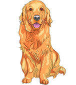 Vector sketch red gun dog breed Golden Retriever — Stock Vector