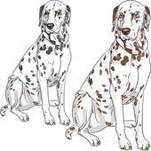 Vector set dog Dalmatian breed sitting — Stock Vector