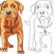 Stock Vector: Vector Coloring Book of red Puppy dog Labrador Retriever