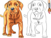 Vector Coloring Book of red Puppy dog Labrador Retriever — Stock Vector