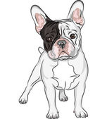 Vector sketch domestic dog French Bulldog breed — Stock Vector