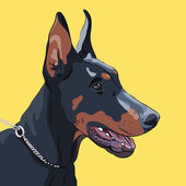 Vector closeup graves perro doberman pinscher raza — Vector de stock